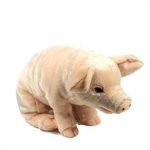 ACP Cochon 56 cm