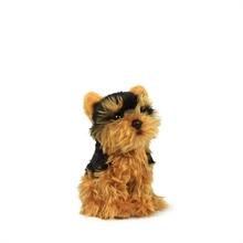 ACP Yorkshire terrier - 15 cm