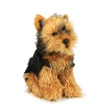 ACP Yorkshire terrier - 23 cm