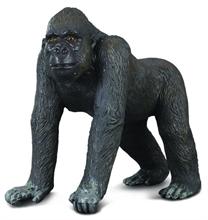 A. sauvages - Gorille de l''ouest - L