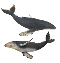 A. des mers - Baleine à bosse - XL