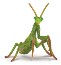 Insectes - Mante religieuse - L