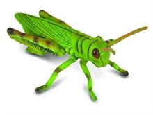 Insectes - Sauterelle - M