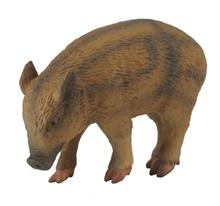 A. des bois - Porcinet sauvage qui mange - S