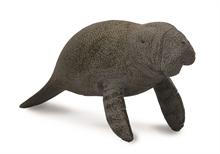A. des mers - Bébé lamantin nageant - M