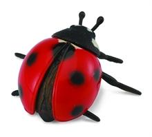 HC3 Insectes - Coccinelle - M #