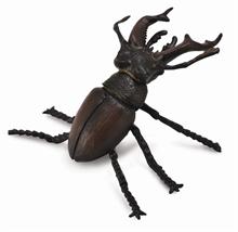 Insectes - Scarabé à cornes - M
